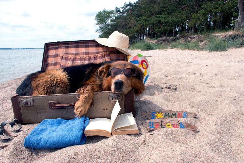 Barf-Alternative für Urlaub und Reise